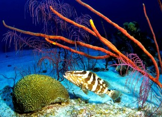 Photo of a colorful fish swimming in the Bahamas amid coral formations.